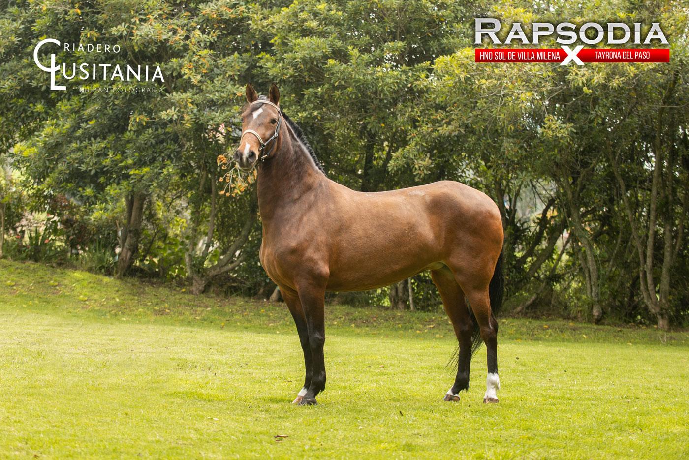 Yegua Rapsodia