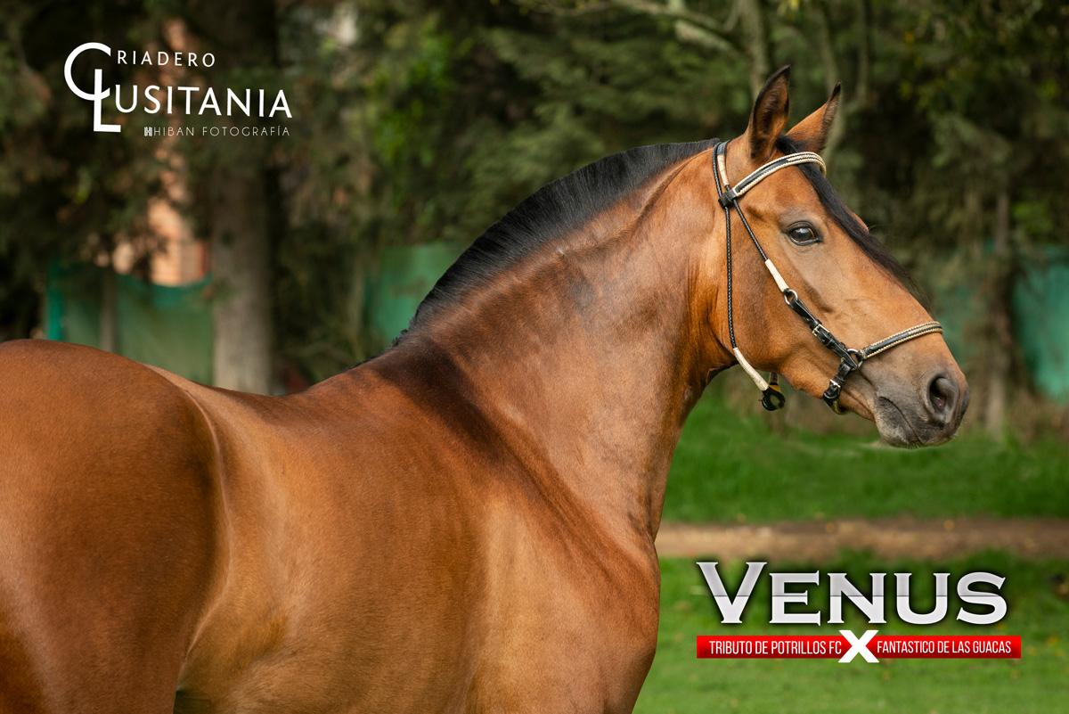 Yegua Venus